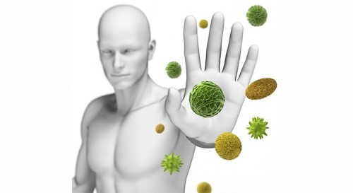 How Does the immune system fight Viruses